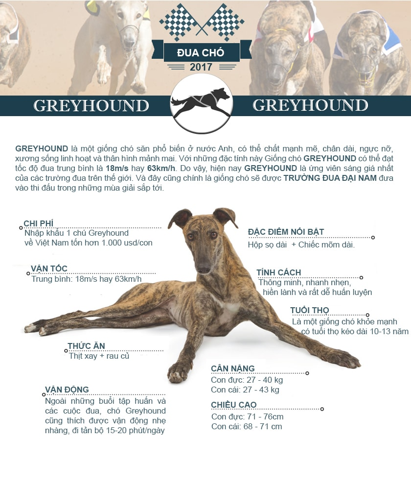 Thông tin cơ bản về giống chó đua Greyhound