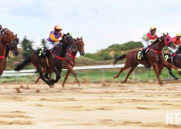 Trường đua ngựa ở Phú Thọ có nguy cơ giải thể