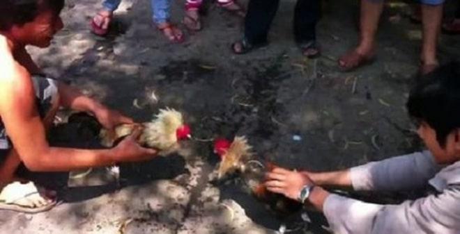 Đá gà ăn tiền