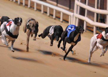 Những điều cần biết về đua chó