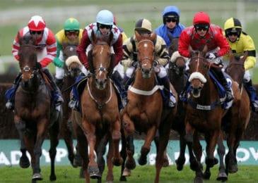 Cần thơ nghiên cứu xây dựng trường đua ngựa 500 triệu USD