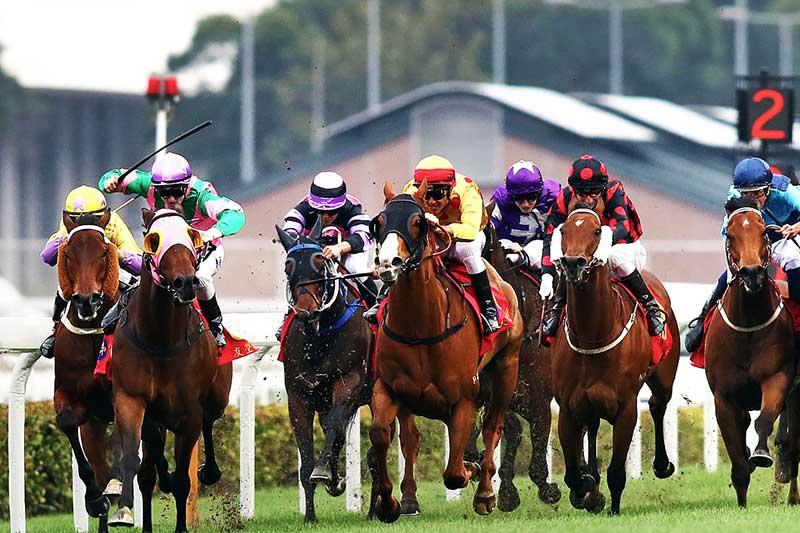 Hình ảnh cuộc đua ngựa tại trường đua valley