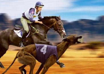 Cá cược đua ngựa, đua chó sẽ đến sớm hơn cá cược bóng đá