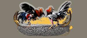 Cá độ đá gà Huế – Biến tấu trò chơi dân gian