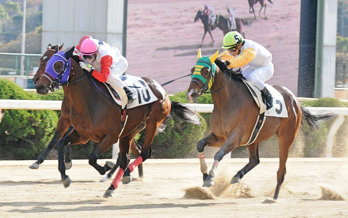 Hình ảnh cuộc đua ngựa tại Tosu-Saga Prefecture