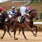 Triều Tiên cho các cược đua ngựa để thu hút khách nhà giàu