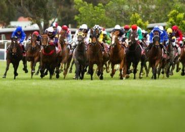 Golden Horse thúc đẩy dự án trường đua ngựa Bắc Ninh trị giá 500 triệu USD