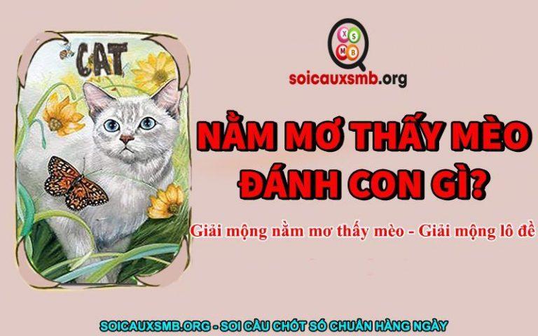 nam-mo-thay-meo-danh-con-gi-768x480